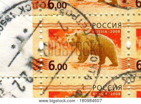 GOMEL, BELARUS, APRIL 7, 2017. Stamp printed in Russia shows image of  The Bears are carnivoran mammals of the family Ursidae, circa 2008.