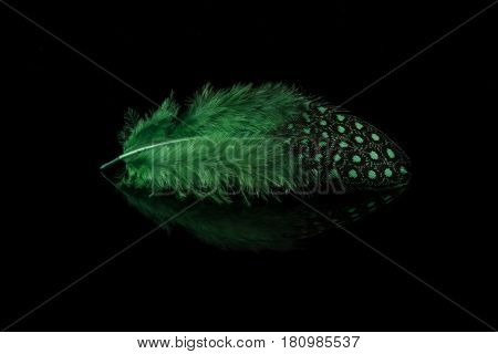 Closeup of a single green  feather on black