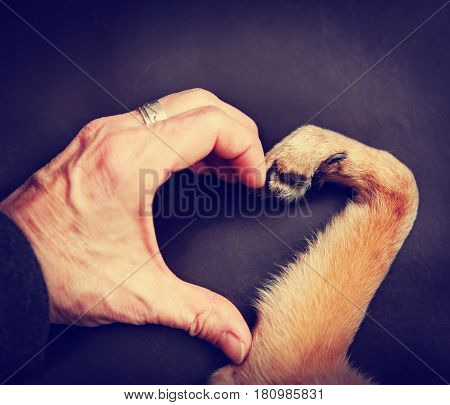 Image of a man and a pooch making a heart shape with the hand and paw conditioned with a retro vintage