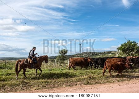 Aigua, Uruguay: Marth 31, 2017 - Gaucho Herding Cows Near Windmills On The Cerro Catedral In The Mal