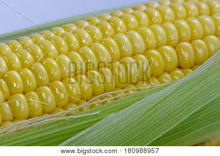 Close up of sweet corn on cobs kernels against white background corn vegetable isolated.Organic corn is a vitamin C food,magnesium-rich food & contains certain B vitamins & potassium.