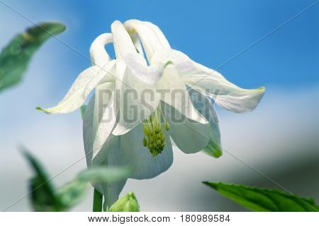 White Flower With Yellow Stamens.