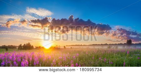 beautiful rural panorama landscape with sunrise and blossoming meadow. purple flowers flowering on spring field . wildflowers blooming on sunset. summer panoramic view