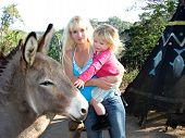 Little girl meeting a donkey at Ramsgate Kwazulu-Natal South Africa poster
