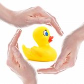rubber duck and hands isolated in white background poster