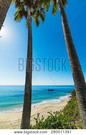 Palm Trees By The Sea In Laguna Beach Shore. Southern California, Usa