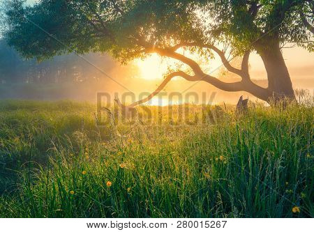 Spring Green Landscape. Spring Background. Spring Nature. Sun Illuminates Green Meadow With Tree In