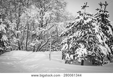 Trail, Road Sign And Spruce Tree Under The Snow Black And White