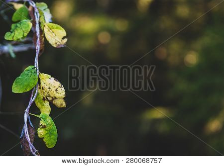 Brown Green And Golden Dead Autumn Leafs With Room To Place Text On The Background