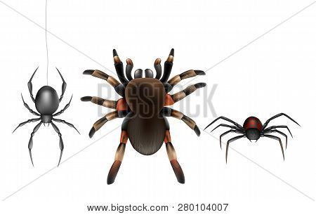 Dangerous Poisonous Spiders Species 3d Realistic Vector Icon Set Isolated On White Background. Big H