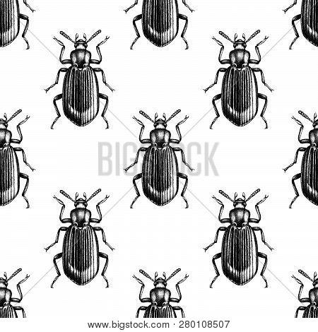 Darkling Beetle Pattern