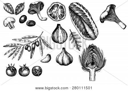 Vector Collection Of Hand Sketched Vegetables. Vintage Veggies And Spices Illustrations Set. Healthy