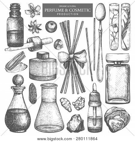 Vector Collection Of Hand Drawn Perfumes And Cosmetics Sketch. Vintage Set Of Aromatic Plants For Hi