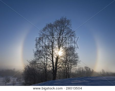 Beams Of A Winter Rising Sun Appear Through A Tree Crone.