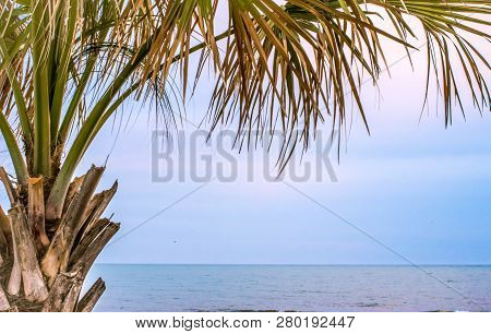 Palmetto Tree On Atlantic. Single Palmetto Tree At Twilight On The Coast Of Mrytle Beach, South Caro