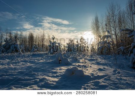 Winter Snow Landscape In The Rays Of The Setting Sun On December Day.
