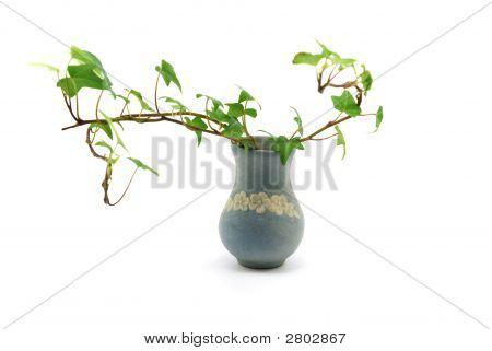 Vase With Ivy