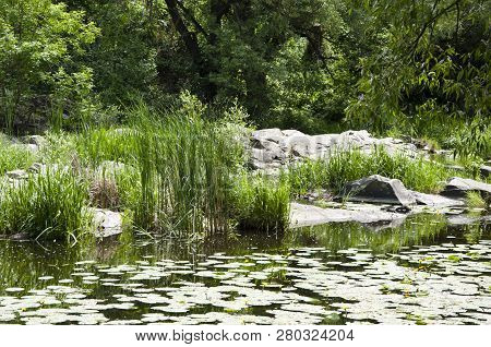 A Very Good Place To Be. Pond Landscape. Lily Pond In Summer Park. Garden Pond On Natural Landscape.
