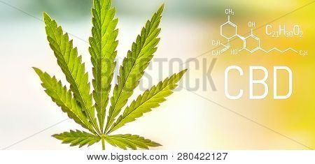 Cbd Medical Marijuana Element. Molecular Structures, Chemical Formula Of Cannabidiol. Growing Cannab