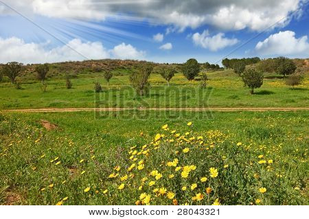 Magnificent cumulus clouds in the high spring sky. The rural footpath crosses a meadow with green trees