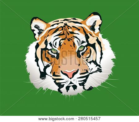 The Tiger Vector Illustration. Tiger Face Front View, Vector Illustration Design - Vektorgrafik. Sty
