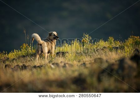Kangal. The Wild Nature Of Bulgaria. Free Nature. A Beautiful Picture Of Nature. Rhodopes. Mountains