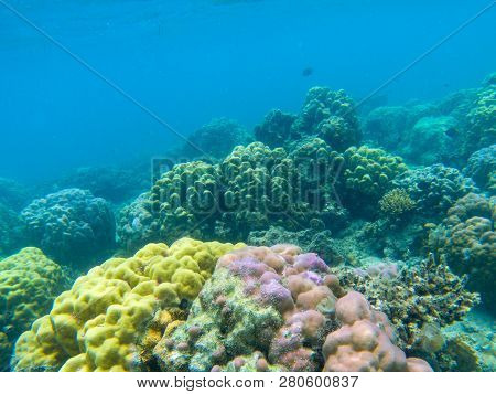 Colorful Coral Reef Diversity. Tropical Seashore Underwater Photo. Marine Nature. Warm Sea Shore. Co