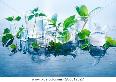 Green Plants In Glass Jars Header. Clarity And Freshness Concept With Leaves And Water. Light Backgr