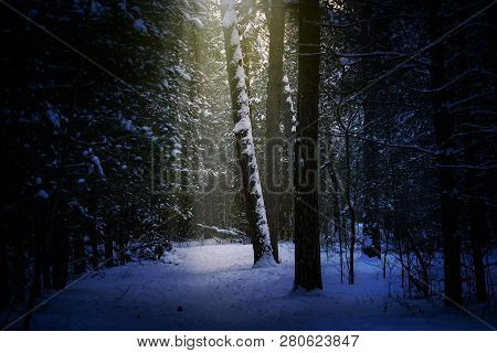 Magical Winter Forest, A Fairy Tale, Mystery.winer Background.