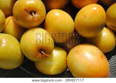 Ziziphus Mauritiana Commonly Known As Ber ,very Much Sweet , Seed Bearing , Seasonal Fruit