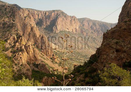 Chisos Mountain entrance canyon at sunrise