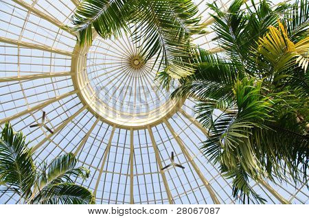 Buffalo and Erie County Botanical Gardens glass ceiling