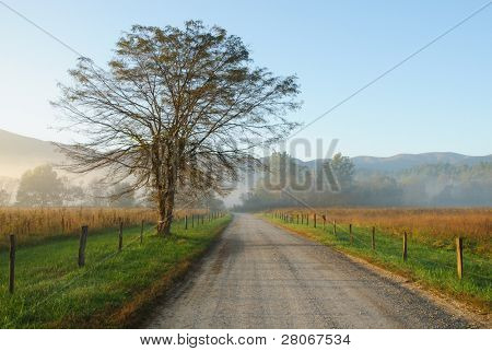 Cades Cove road in fog at sunrise poster