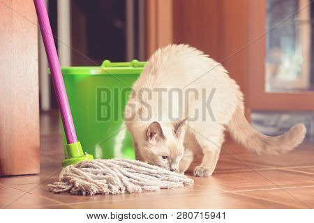 Curious Cat Near The Bucket And Mop For Cleaning The Floor.