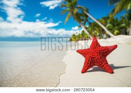 Seastar Or Sea Starfish Standing On The Beach Of Island Saona, Near Punta Cana Resort. Dominican Rep