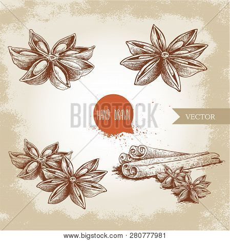Anise Star Sketches Set. Single, Batch And Composition With Cinnamon Sticks. Herbs And Condiment Ret