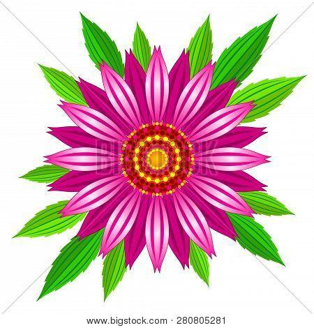 Echinacea Purpurea Vector Illustration. Vector Illustration Of Echinacea Purpurea Blooming Flower Wi
