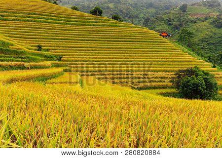Rice Paddies In Sapa, Vietnam