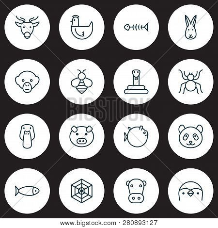 Animal Icons Set With Mallard, Rabbit, Monkey And Other Bunny Elements. Isolated Vector Illustration
