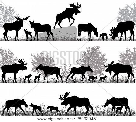 Silhouettes Of Mooses Also Named Elks And Its Cubs Outdoors