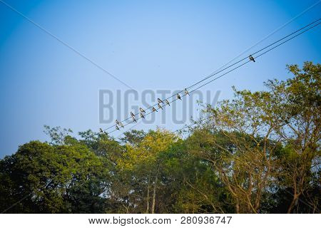 Flock Of Migrating Sparrow Birds Sitting On A Wire Against The Blue Sky. Beautiful Countryside Rural