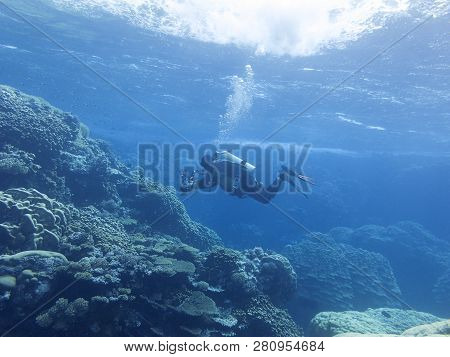 Colorful Coral Reef At The Bottom Of Tropical Sea,  Diver Photographer, Underwater Landscape