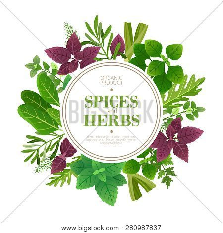Spices And Herbs Background. Fresh Herb Cooking Aromatic Plants. Indian Food Vector Frame. Culinary