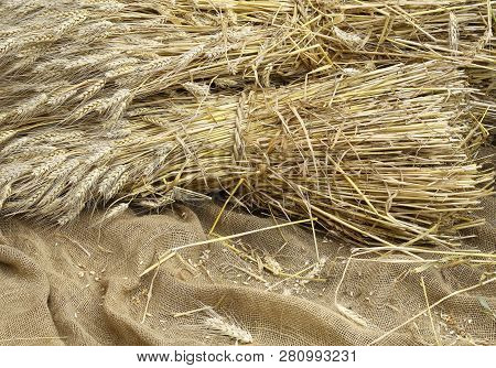 Ears Of Wheat On A Background Of Raw Jute Fabric