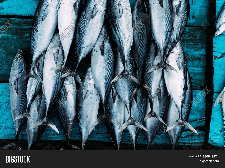 Market Marine Fish Image Photo Free Trial Bigstock