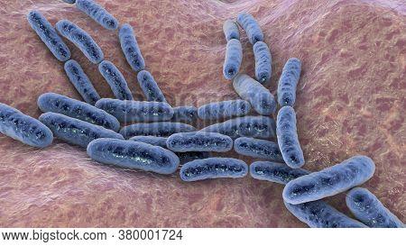 Probiotic Bacteria Lactobacillus, 3d Illustration. L. Acidophilus, L. Helveticus And Other. Normal F