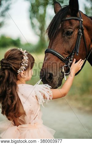 A Little Girl Strokes A Horse Her Favorite Horse On The Head. Communication Of A Child With A Horse