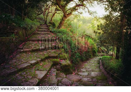 Nice And Romantic Footpath With Flower Covered Stone Stairs In The Middle Of A Green Dremy Forest In