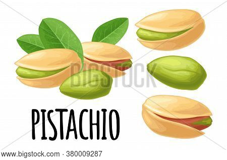 Pistachio Nut With And Without Shell. Vector Color Realistic Illustration. Isolated On White Backgro