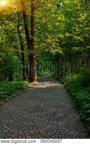 Paved Lonely Park Trail For Walking And Promenade Nature Landscaping Scenery Environment Idyllic Spa